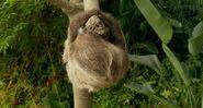 Life.of.Pi Sloth