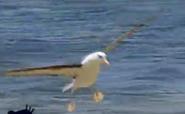 MMHM Gull