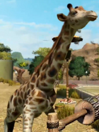 Rothschild-giraffe-zootycoon3