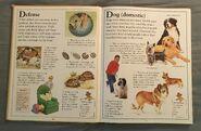 The Kingfisher First Animal Encyclopedia (21)