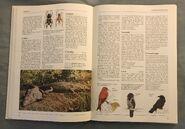 The Kingfisher Illustrated Encyclopedia of Animals (43)