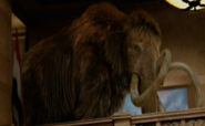 Woolly mammoth NATM