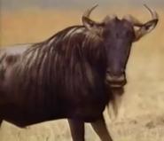 Zoboomafoo Wildebeest