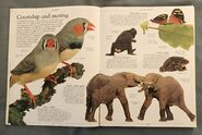 DK Encyclopedia Of Animals (11)