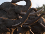 List of Species in the Disney Media