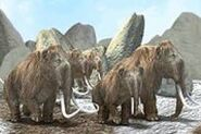 What are Woolly Mammoths