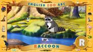 ABC Raccoon