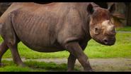 Baton Rouge Zoo Eastern Black Rhino
