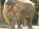 List of Species in Cincinnati Zoo and Botanical Gardens