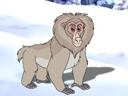 Rileys Adventures Japanese Macaque