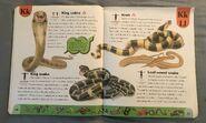 Snake Dictionary (11)