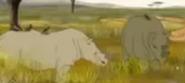 Kirikou Rhinos