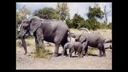Noah's Ark Walruses Elephants Too