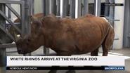 Virginia Zoo Rhino