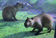 Capybara ZTX