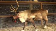 Cincinnati Zoo Reindeer