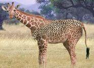 Giraffe switch zoo
