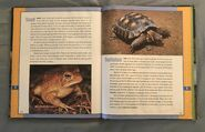 Scholastic Encyclopedia Of Animals (54)