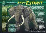 Strange Wonders Elephant