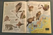 The Animal Atlas (11)