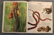 DK Encyclopedia Of Animals (152)