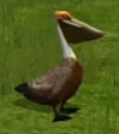 Pelican-wildlife-park-2