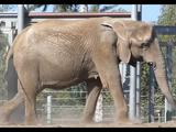 List of Species in San Diego Zoo