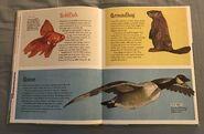 The Dictionary of Ordinary Extraordinary Animals (19)
