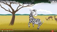 Is It A Zebra Is It A Penguin Is It a Weasel Is It A Siamese Cat