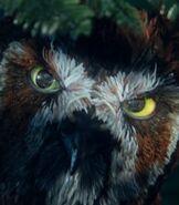 Jatt in Legend of the Guardians The Owls of Ga'Hoole