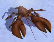 Lobster IC