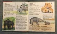 My First Book of Animals from A to Z (10)