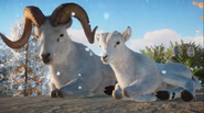 Planet Zoo Dall's Sheep