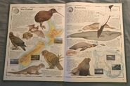 The Animal Atlas (26)