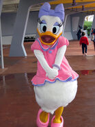 Walt Disney's Daisy Duck Costume