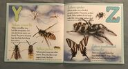 Bugs A-Z (13)