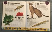 Pet Dictionary (25)