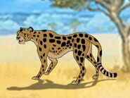 Rileys Adventures Tanzanian Cheetah