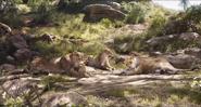 TLK 2019 Lioness