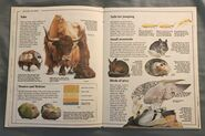Usborne World Wildlife- Mountain Wildlife (3)