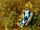 Streaked Chromodoris
