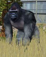 Gorilla-wildlife-park-2