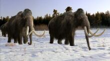 Mammoth, Wooly