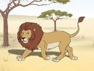 Rileys Adventures West African Lion