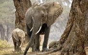 Zimbabwe-elephant 3245400b