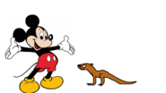 Mickey Meets Asian-Small Clawed Otter
