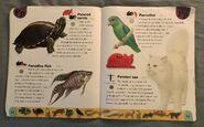 Pet Dictionary (18)