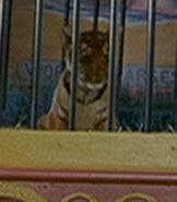 Baby-tiger-dr-dolittle-87.1