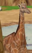 Giraffe-zoo-empire