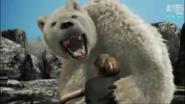 UTAUC Polar Bear 3